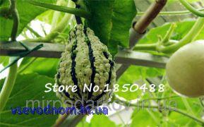 Клоун семена дыни, Декоративные тыквы